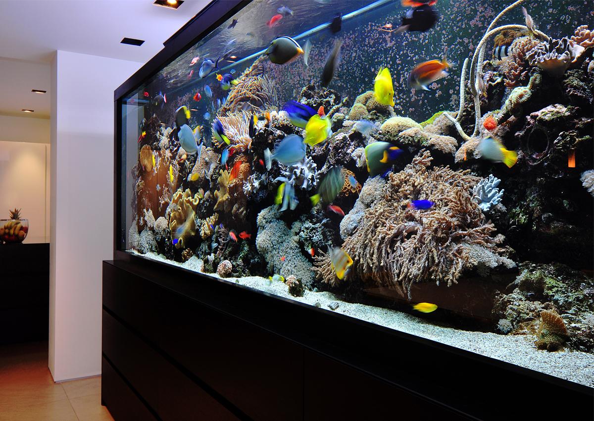 Top 10 outstanding aquariums custom aquarium design for 10 fish in a tank riddle