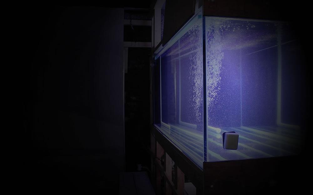 Aquarium Installation Main Image