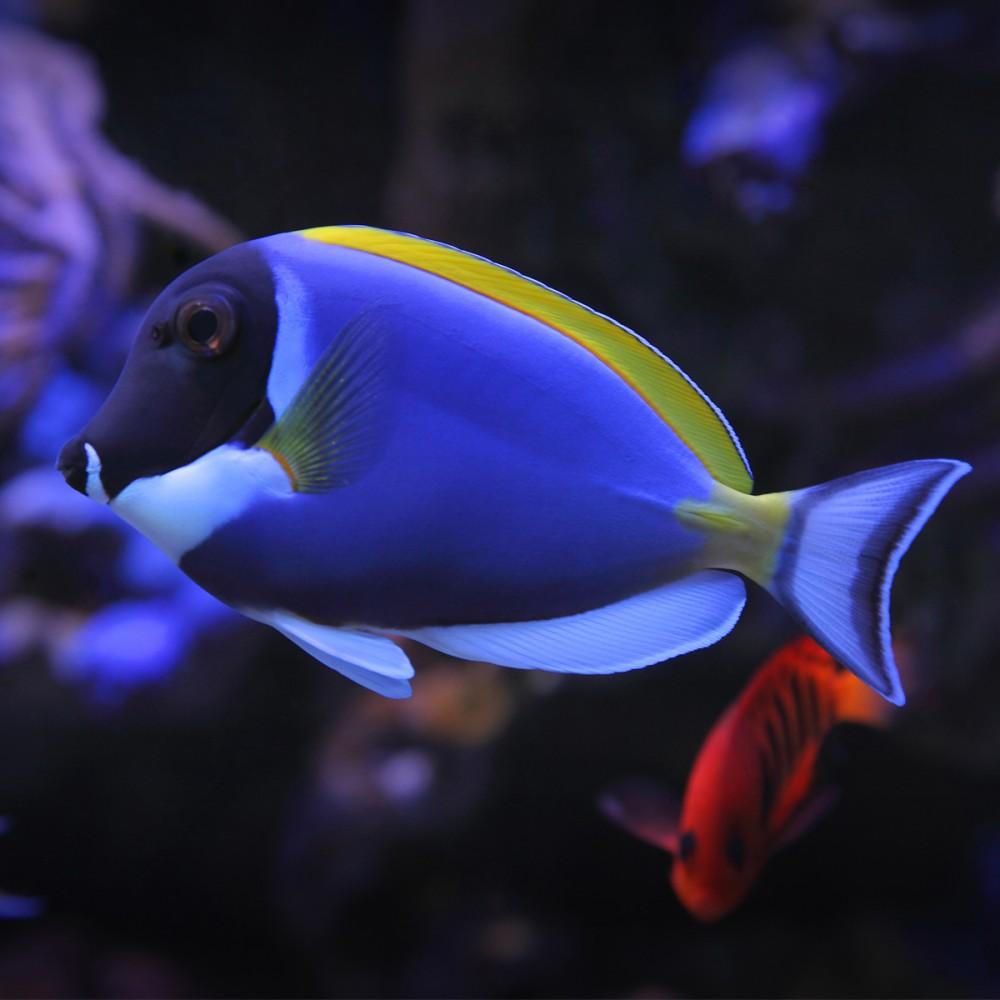Luxurious custom made aquarium aquarium architecture for Blue fish aquarium
