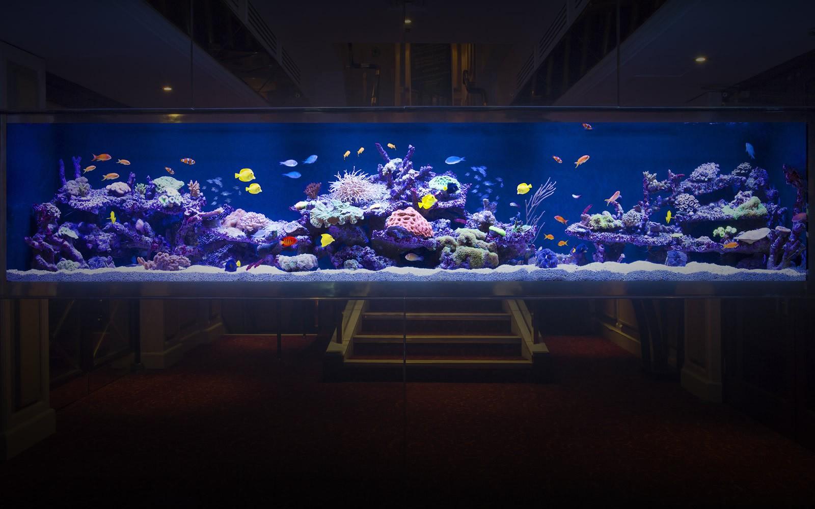 Luxurious custom made aquarium aquarium architecture for Outdoor aquarium uk