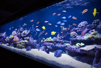 Aquarium Designs - In Wall Aquariums | Free Standing Tanks