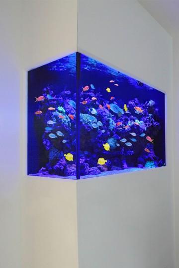 Aquarium Designs In Wall Aquariums Free Standing Tanks