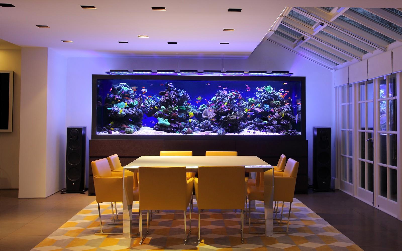Designer Fish Tank Aquarium Architecture