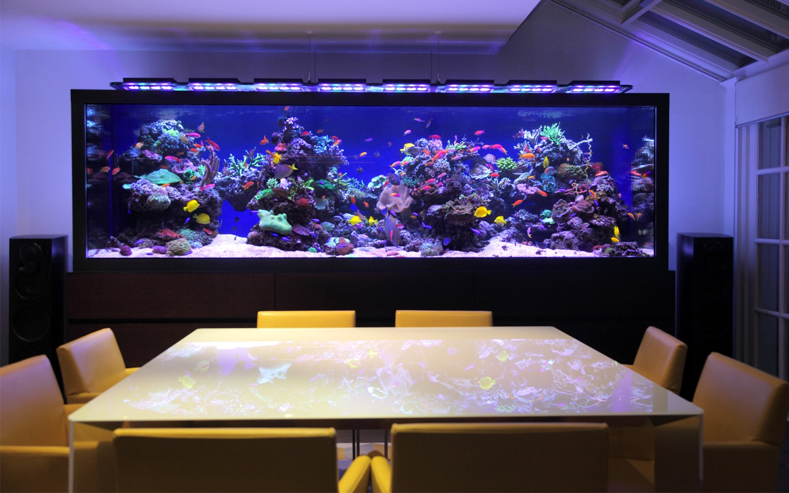 Luxurious custom made aquarium aquarium architecture for Design aquarium