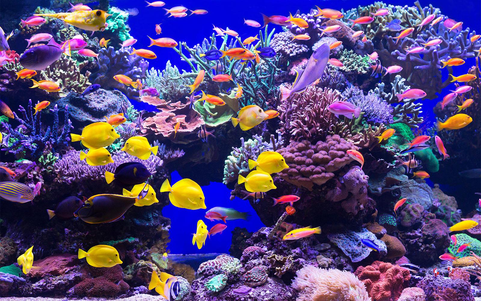 Luxurious custom made aquarium aquarium architecture for Site aquarium