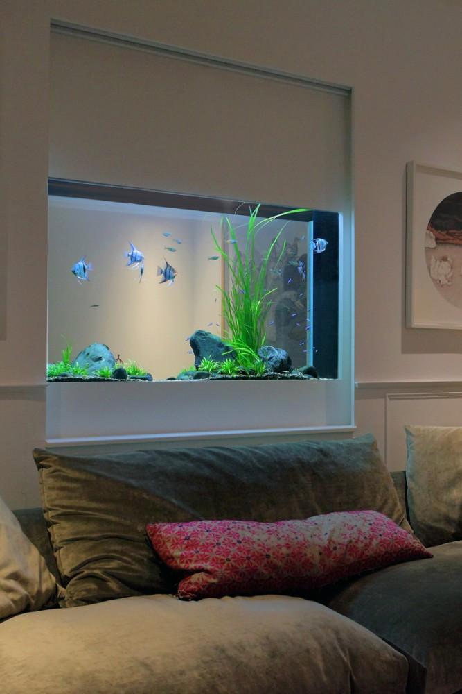 Freshwater Aquarium Aquarium Architecture
