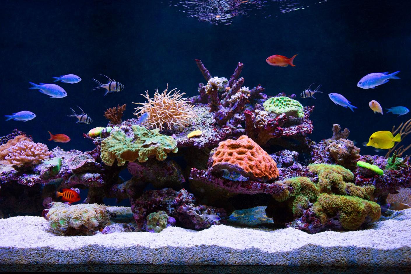 Saltwater Aquarium Vs Freshwater Tank Pros Amp Cons