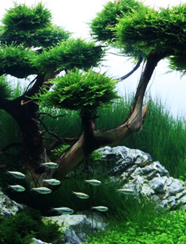 Aquarium Architecture