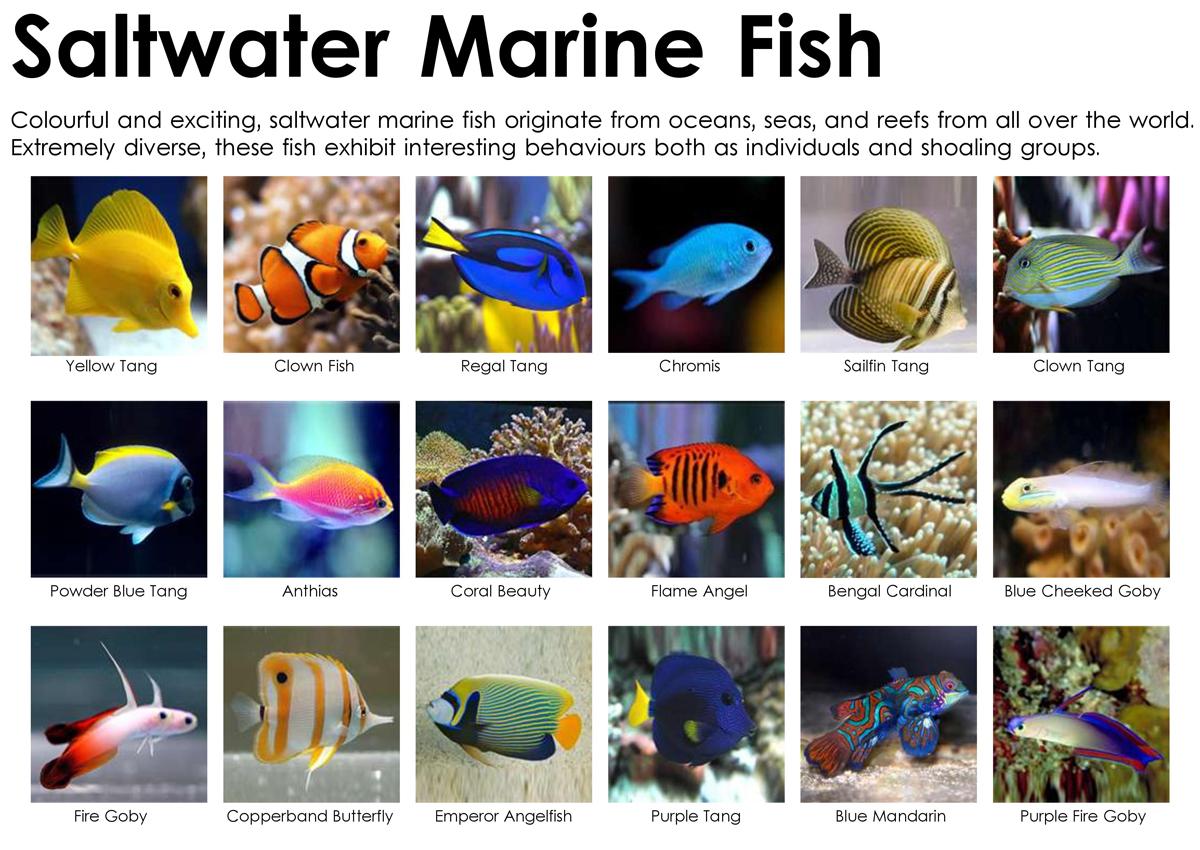 Saltwater aquarium vs freshwater tank pros cons for Salt water fishes