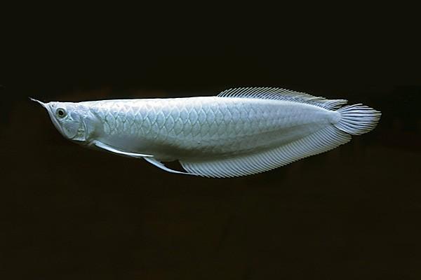 Rare Fish Christmas Gifts For