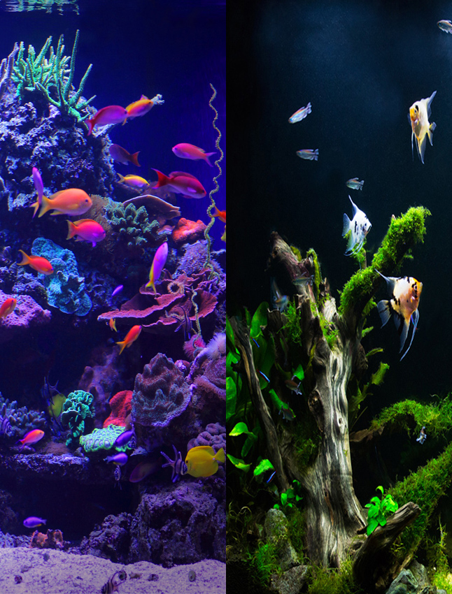 Changing From a Freshwater to a Saltwater Aquarium