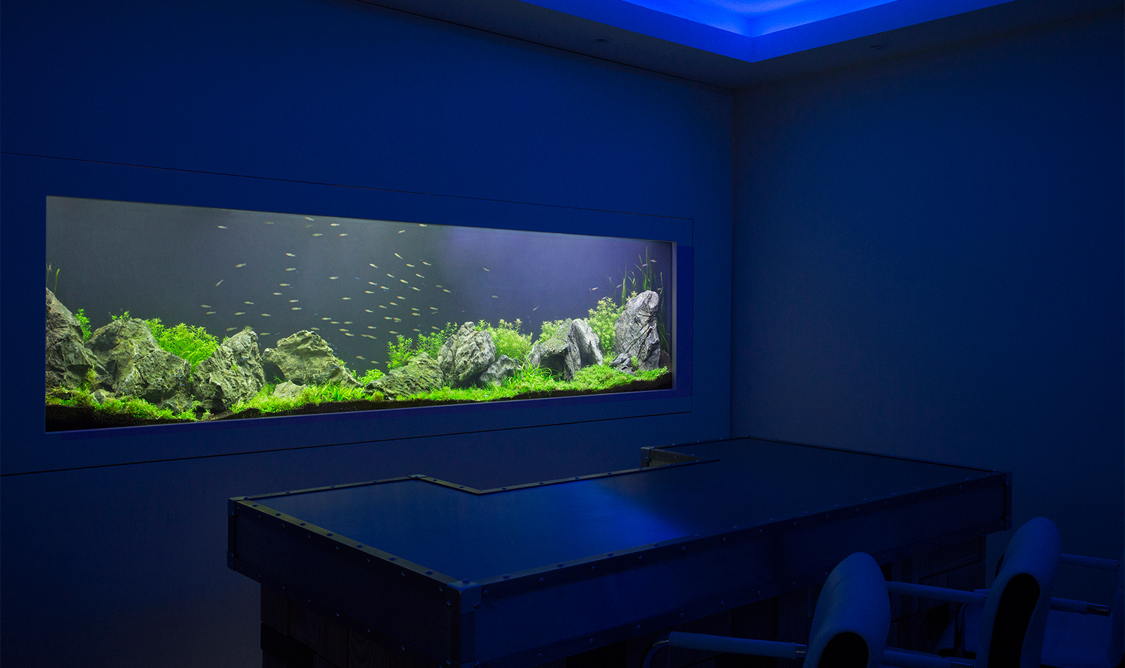 aquarium architecture custom aquarium design