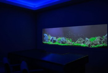 Aquarium Designs - In Wall Aquariums | Free Standing Tanks on home entertainment designs, home cafe designs, home gardening designs, home dog kennel designs, home glass designs, home art designs, home salt designs, home school designs, home library designs, home lake designs, home archery range designs, home beach designs, home water feature designs, home cooking designs, home construction designs, home decor designs, florida home designs, home plans designs, home park designs, home castle designs,