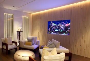 Aquarium Designs In Wall Aquariums